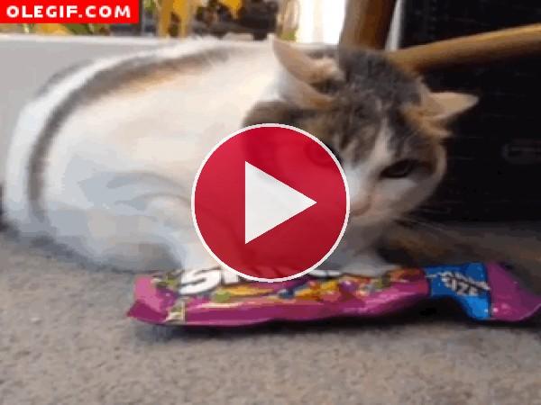 GIF: Gato protector