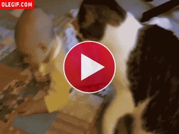 Gato mimando a un bebé