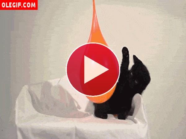Gatito jugando con un globo