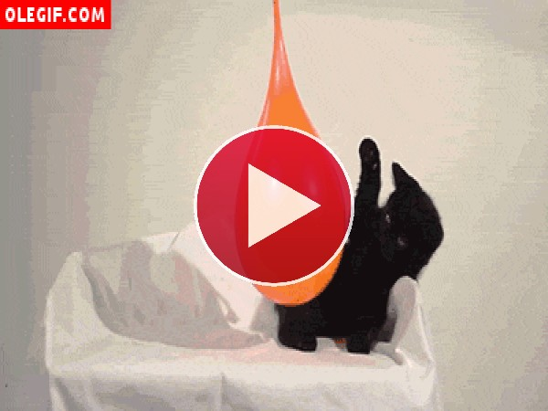 GIF: Gatito jugando con un globo