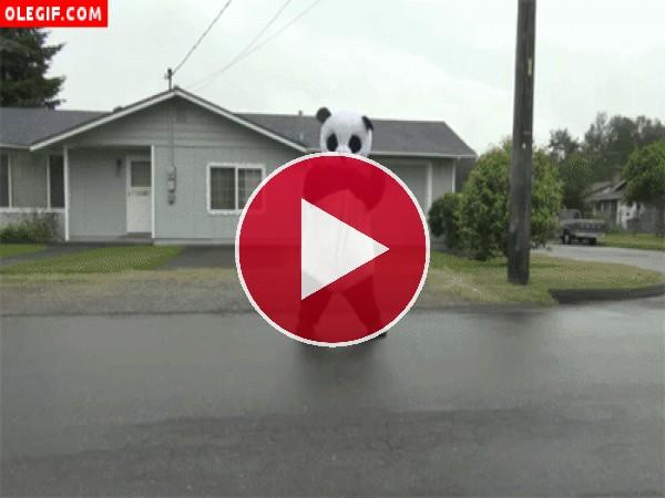 Oso panda bailando