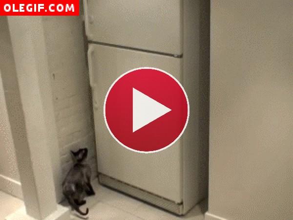 Gato abriendo una nevera