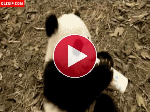 Panda tomando un biberón