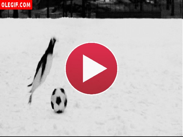 Pingüinos jugando al fútbol