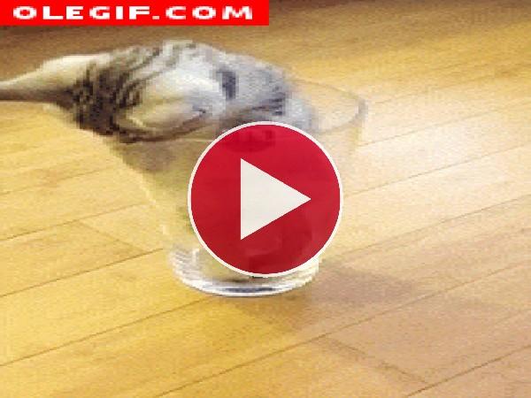 Gatito dentro de un vaso