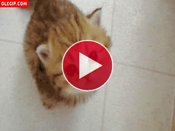 GIF: Gatito maullando