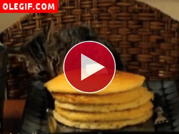 GIF: Gato ladrón