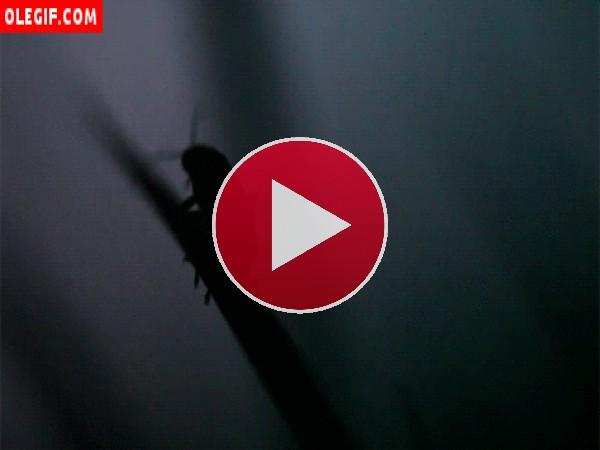 GIF: Luciérnaga en una rama