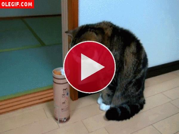GIF: Gato asustado