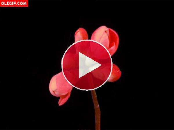 Flores en una rama