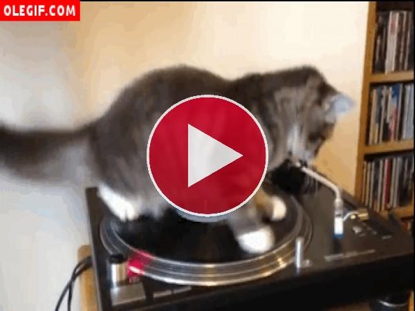 Gato girando en un tocadiscos