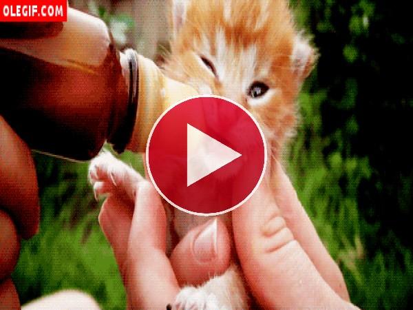 Alimentando a un gatito