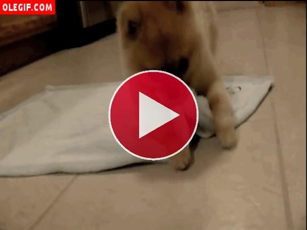 GIF: Perro con una toalla