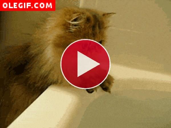 GIF: Gato tocando el agua