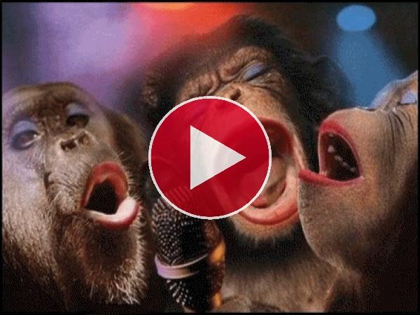 GIF: Monas cantando