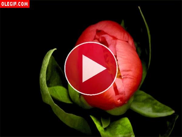 Flor en movimiento