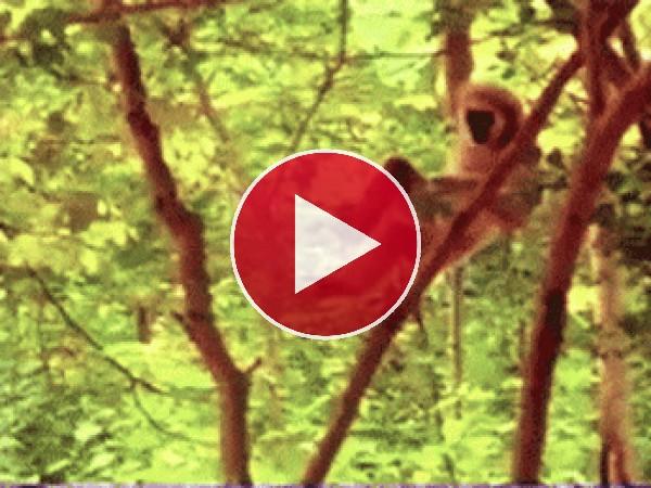 Mono travieso