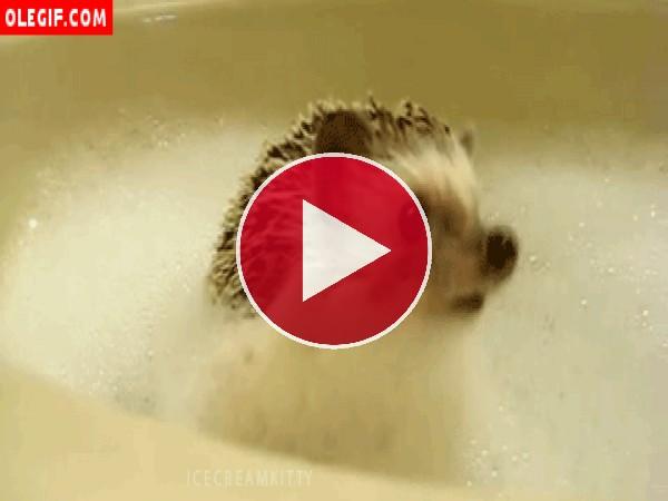 GIF: Erizo en un baño de espuma