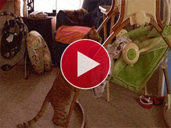 GIF: Gato meciendo a un bebé