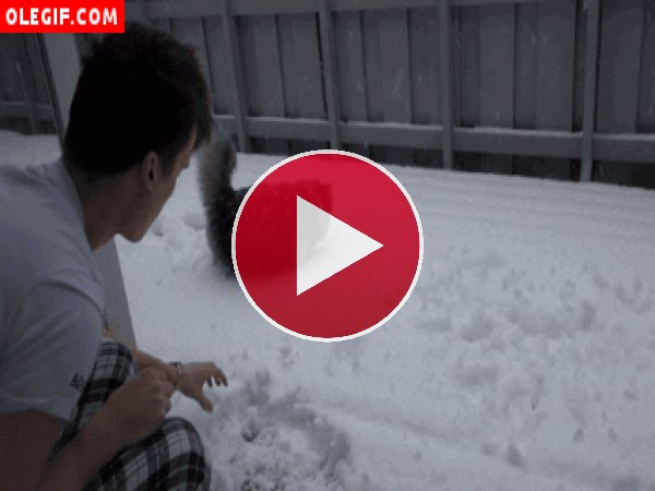 GIF: Gato jugando en la nieve