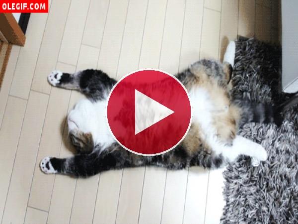 Gato tumbado panza arriba