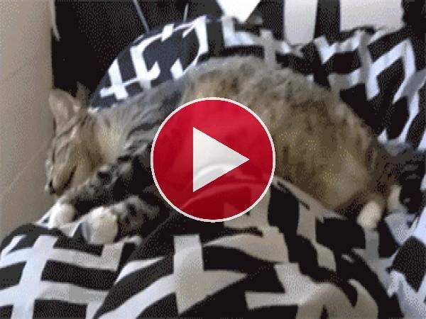 La pesadilla de un gato