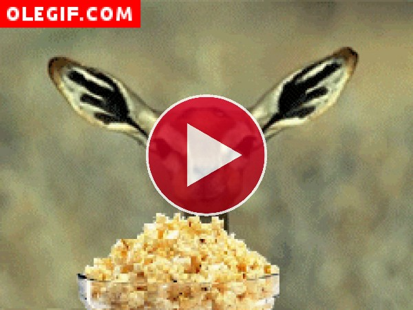 Antílope comiendo palomitas