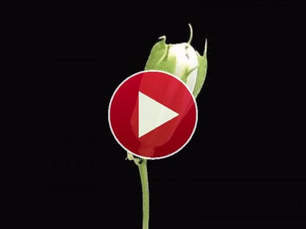 GIF: Flor sorprendente