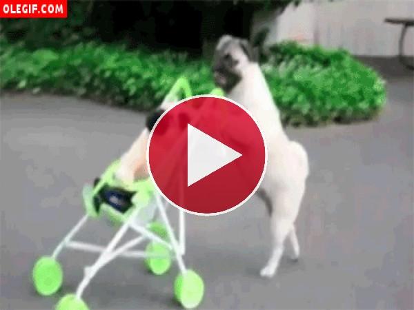 Perro empujando un carrito
