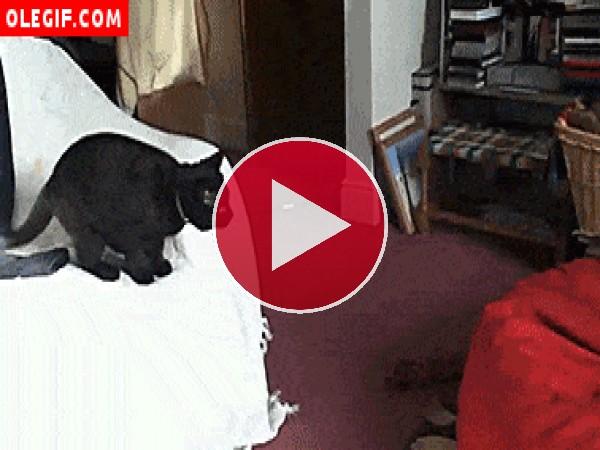 Gato saltando a un puf