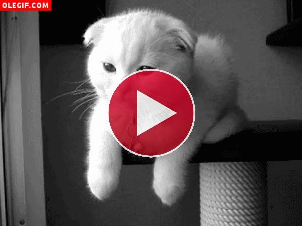Gato guiñando un ojo