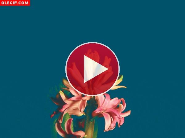GIF: Flores en movimiento