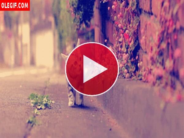GIF: Gatito observando las flores