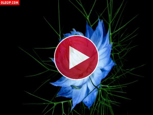 Gran flor azul en movimiento