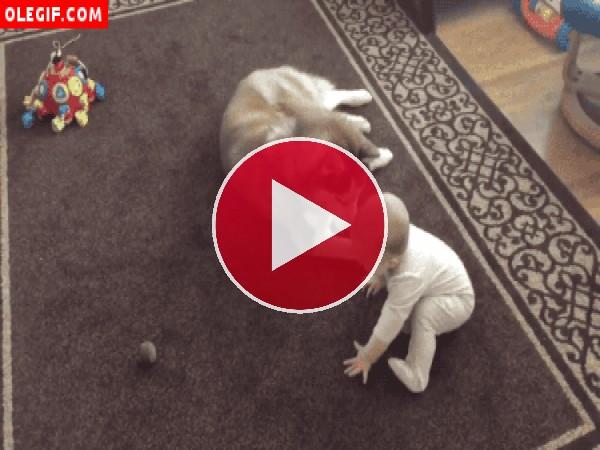 GIF: Juegos sobre la alfombra