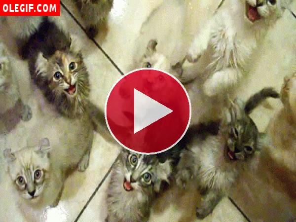 GIF: Parece que estos gatitos están hambrientos