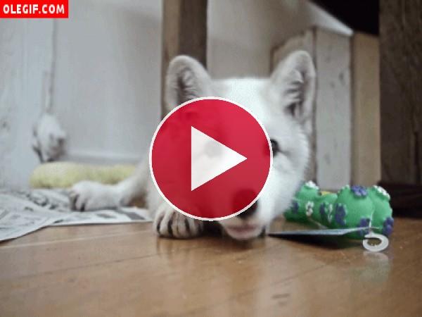 GIF: Perrito tumbado en el suelo moviendo la cabeza