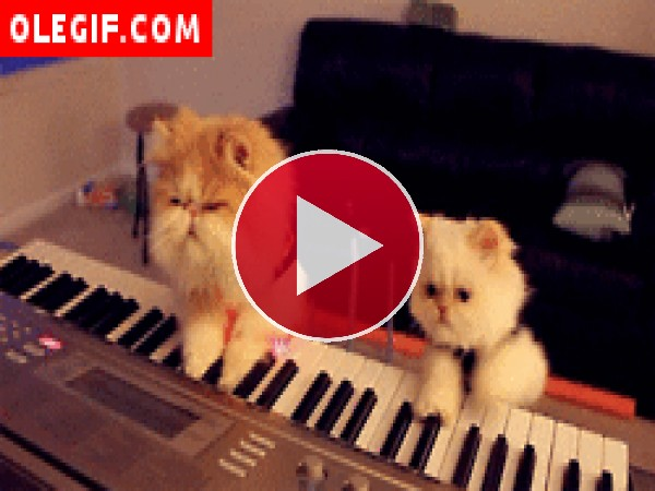 GIF: Mira a estos gatos cómo tocan el piano