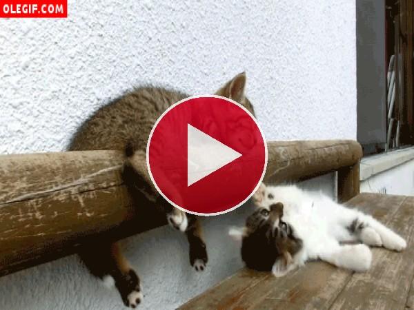 GIF: Eso te pasa por querer jugar y molestar al gato que está dormido