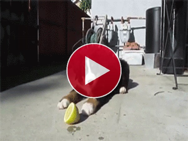 GIF: Está claro que a este perro no le gusta el aroma del limón