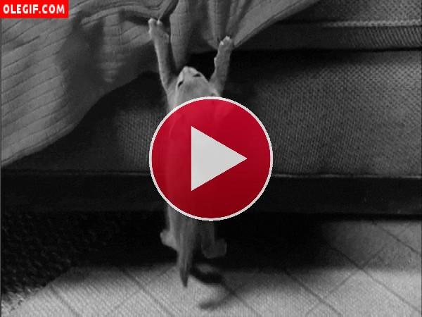 Mira a este gatito cómo se ha quedado colgando