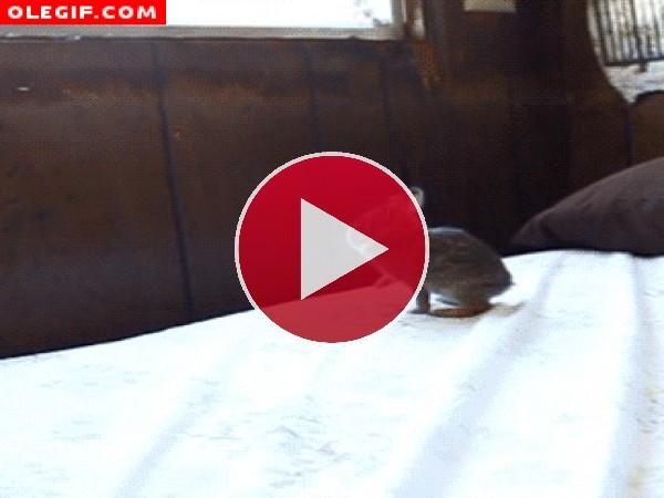 GIF: Este conejo se queda con las ganas de mirar por la ventana