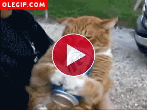 ¿Se habrá vuelto adicto este gato a los refrescos?