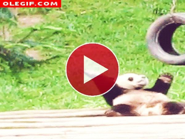 Este panda quiere estar en forma y se marca unas abdominales