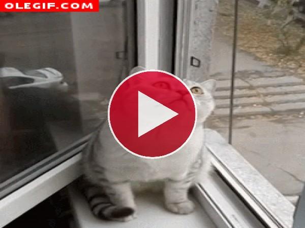 Qué mirará este gato que está tan embobado