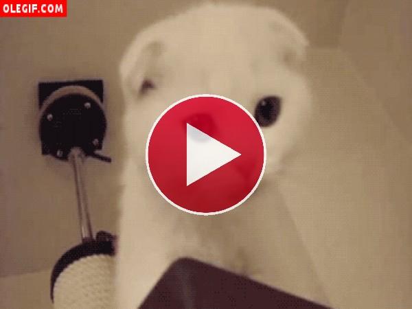 GIF: Mira a este gato cómo cierra los ojos cuando maulla