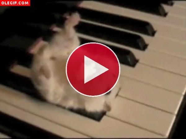 GIF: La pasión de este hámster es comer palomitas sobre las teclas del piano