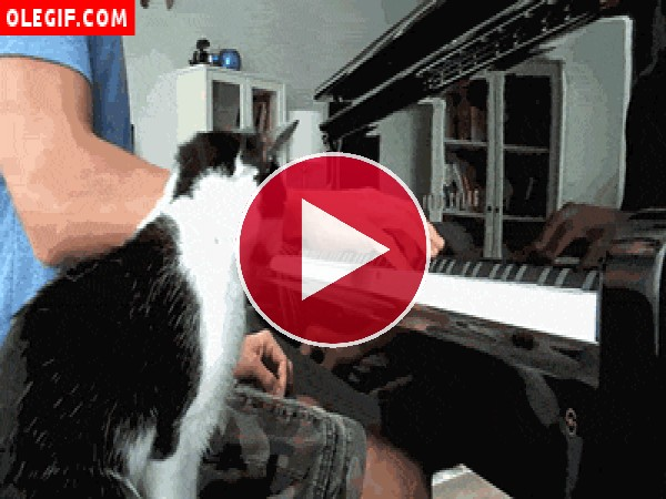 Este gato quiere aprender a tocar el piano