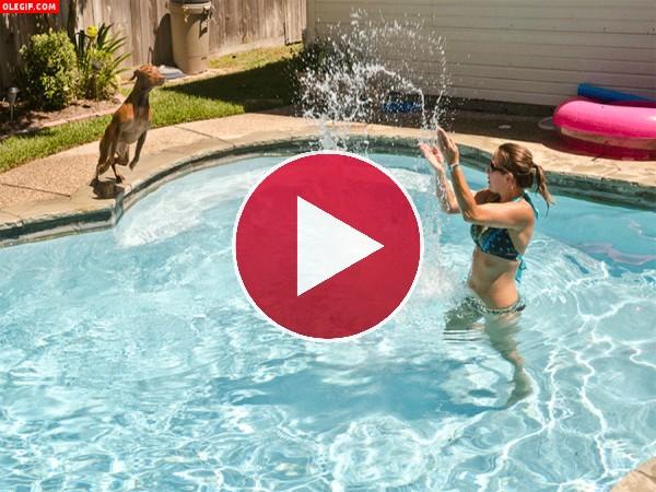 Menudo chapuzón se da este perro en la piscina