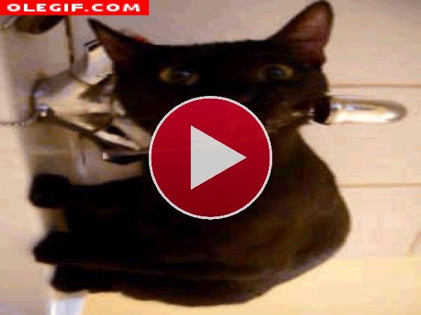 GIF: Este gato está tan sediento que bebe agua del grifo